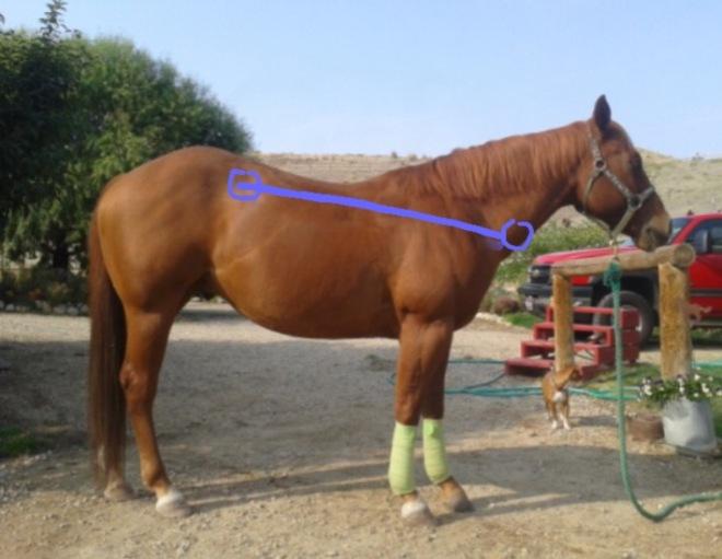 Downhill horse blog