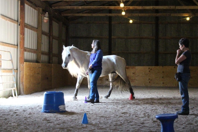 Tarot School Horse clinic