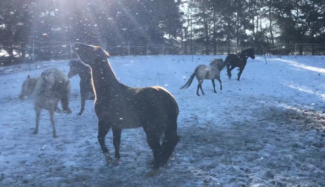 Winter mares